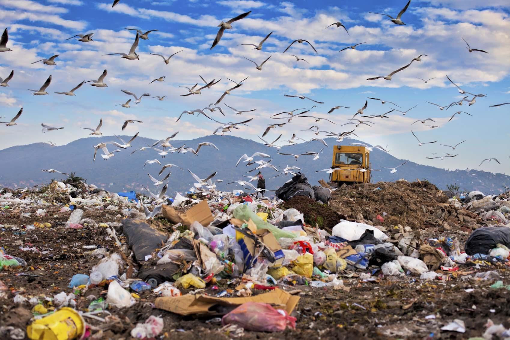 العنصرية البيئية والعدالة البيئية وحركة الإنصاف البيئي: الجزء الأول